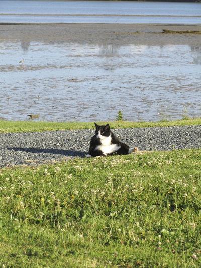 Lazy Cat Cat