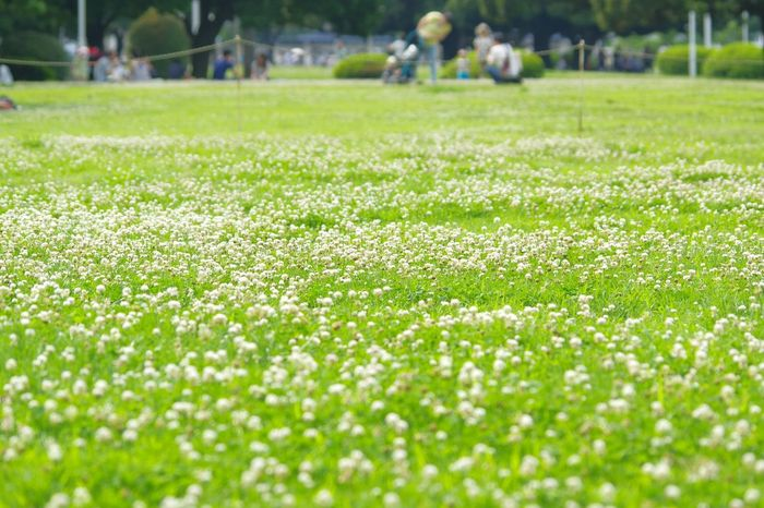 Cloverfield Flowers Snap Clover Field