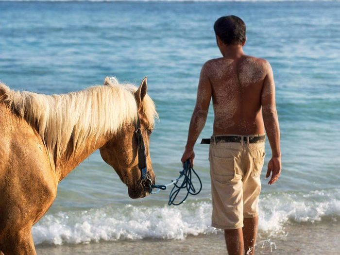 Rear view of shirtless man with horse on shore at beach
