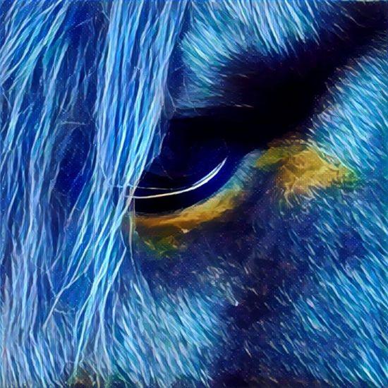 Horseeye Horse Eye Horse Pferd Quarterhorse The Eye of my horse