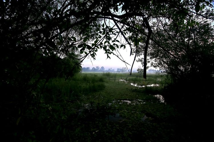 Morning View HUAWEI Photo Award: After Dark Tree Water Lake Field Sky Grass Landscape