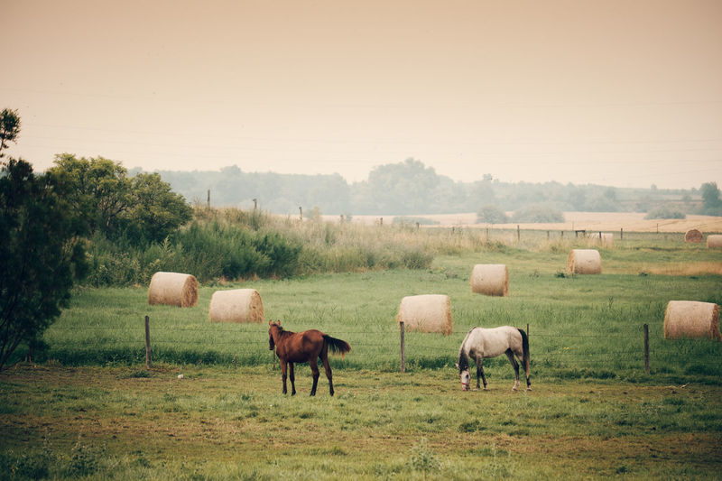Pasture Agriculture Animal Animal Themes Domestic Domestic Animals Environment Field Grass Grazing Group Of Animals Herbivorous Horse Land Landscape Livestock Mammal No People Outdoors Plant Sky Vertebrate