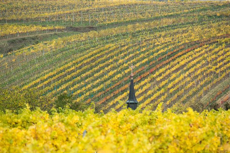 Herbst Herbststimmung Autumn Austria Landschaft Landscape Oesterreich Weinberge Vineyards  Panorama Day Weinviertel