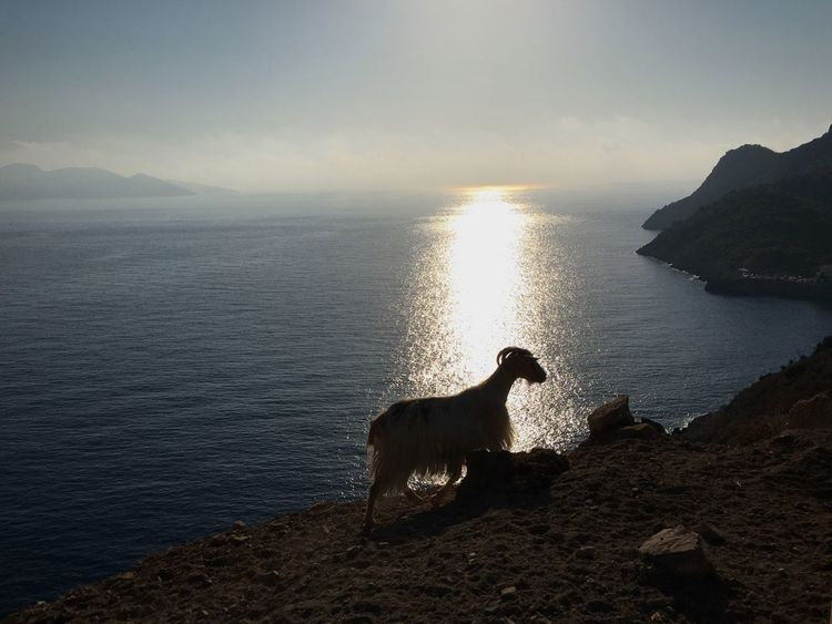 My Year My View Greece Sea And Sky Goat Sunset Water One Animal Horizon Over Water Beauty In Nature