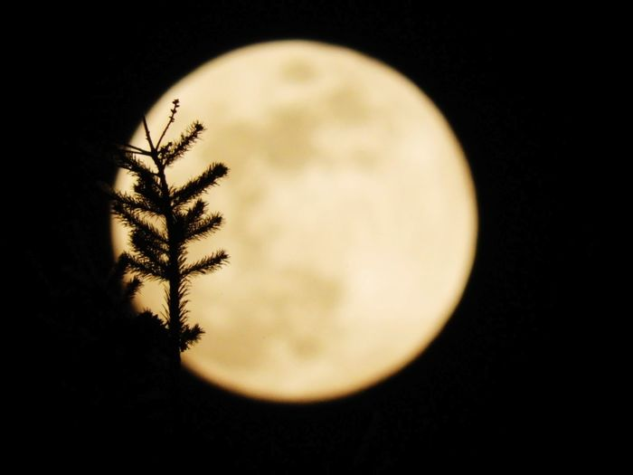 Tree Black Background Night No People Nature Close-up Moon Astronomy Outdoors Space FoolMoon Supermoon