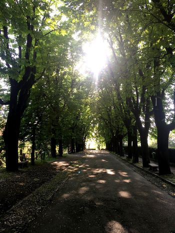 Love me some tree-lined boulevard Tree Plant Sunlight Growth Nature The Way Forward Direction