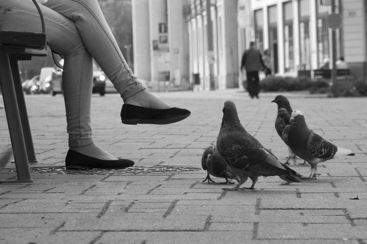 Animal Themes Animals In The Wild Bird Footwear Friendship Human Body Part Human Leg Lifestyles Low Section Occupation Part Of Pigeon Real People Relaxation Shoe Standing Togetherness Wildlife