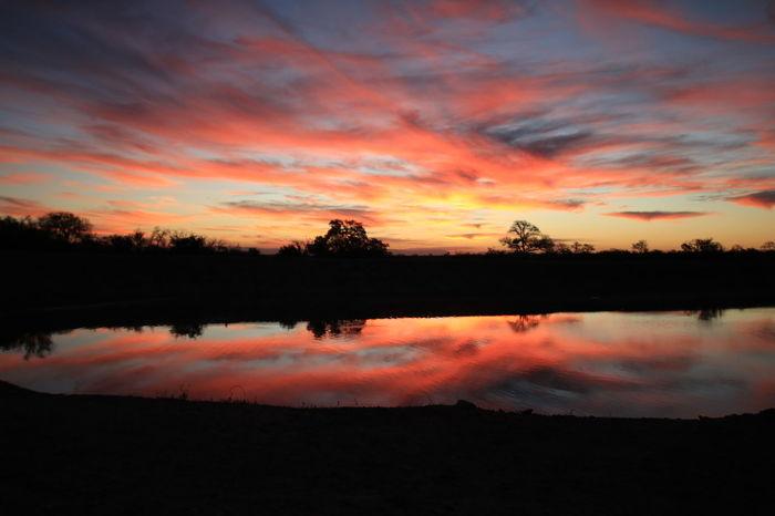 Sunset Sabi Sands Africa African Safari No Filter, No Edit, Just Photography