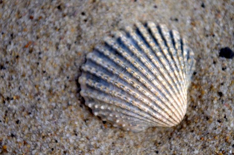 Shell Shell Seashell Seashells Sea Seaside Beach Sand Macro Sandy Sandy Beach Studland Studlandbay Studlandbeach Dorset Dorset Coast