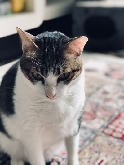 EyeEm Selects Domestic Cat Pets Domestic Animals Feline Animal Themes One Animal Cat Mammal Indoors  Whisker Portrait Close-up Sitting