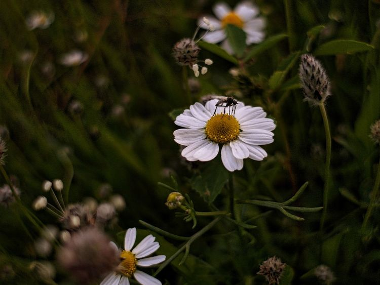 🌼Spring daisies🌼 Showcase March Spring Flowers Spring Nature Green Ex2f Q Focus On Art No People Everything In Its Place Macro Beauty Urban Spring Fever Things I Like My Favorite Photo