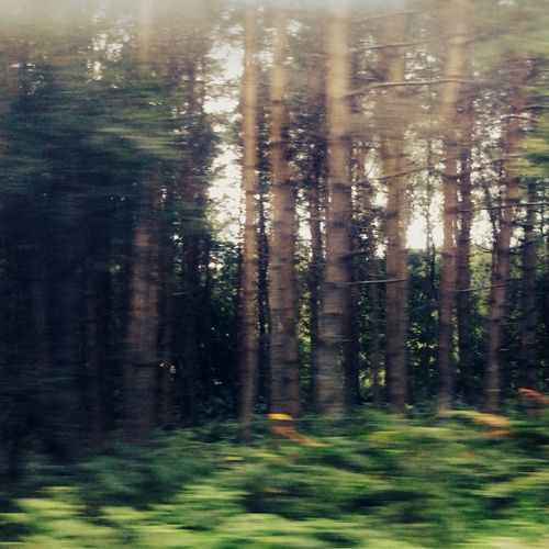 No filter ? photo took on the way to cannich ?? Camping Being Adventurous Enchanted Forest Photography First Eyeem Photo