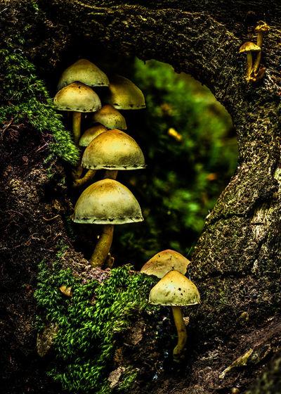 Mushroom Tunnel