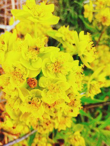 Hello World Flowers Nature Biutiful Hello World Relaxing
