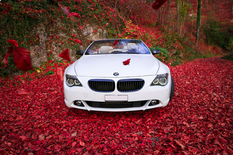 Autumn Leaves - BMW Angel Eyes Autumn BMW Welt  Bmw Car Nature Red Wheel Zug Angel Aversus Bmw Car Convertible Convertible Car E63 E64 Eyes Forest Freude Am Fahren Leaf No People Switzerland Walchwil White Angel Wihte