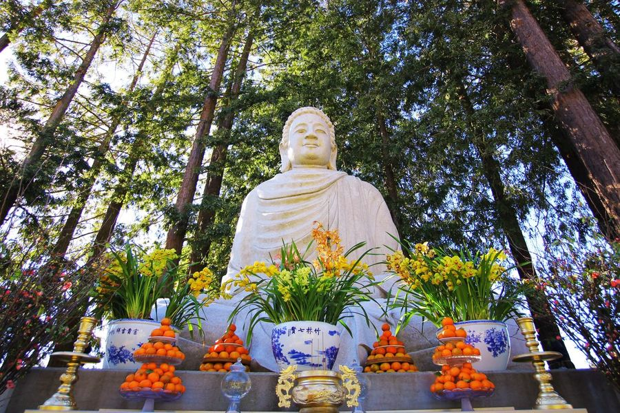 Buddha Religion Religious  Vietnam New Year Woods