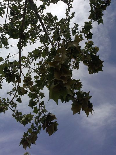 sometimes all you have to do is look up even if all you see are tree branches with leaves lol California Photography Nature Lifeoffanni