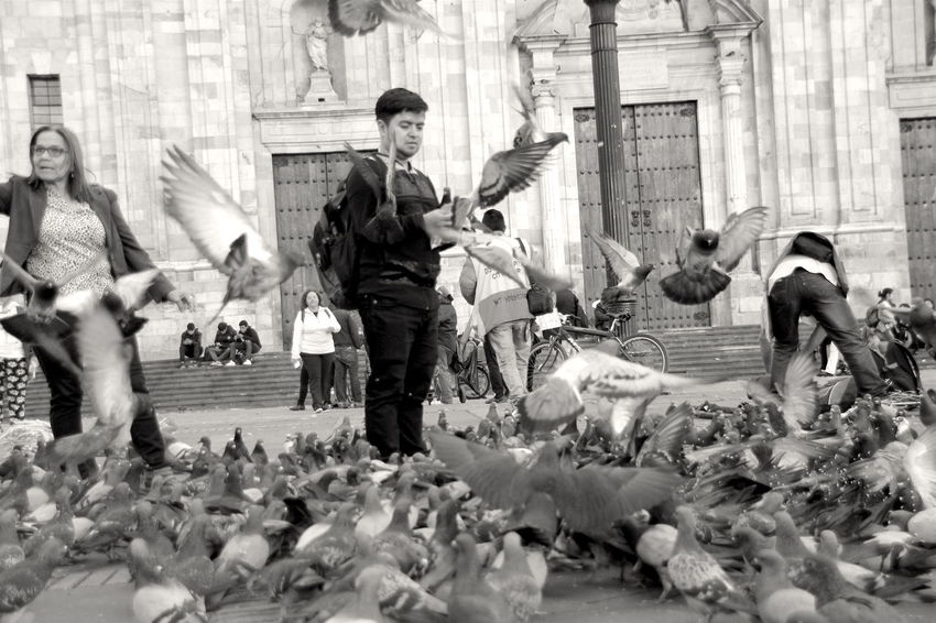 Bogotá Doves Adult Architecture Archival Arts Culture And Entertainment Bird Blackandwhite City Crowd Day Full Length Group Of Animals Group Of People Men People Real People Representation Streetphotography Women Young Adult