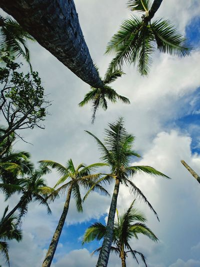 Hawaii Dream Big Island Hawaii Sky Palm Tree Cloud - Sky Low Angle View Branch Nature Beauty In Nature