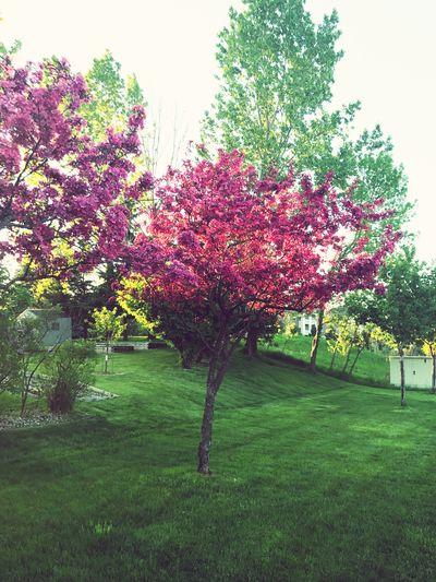 Flower tree in park