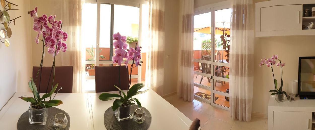 orchids.....