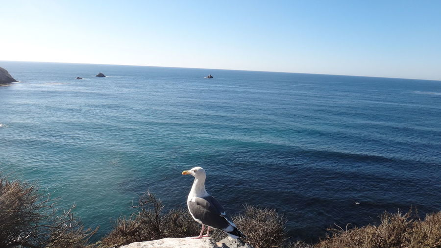 PISMO BEACH CALIFORNIA USA Animal Themes Animals In The Wild Balance Beach Bird Carefree Day Escapism Getting Away From It All Horizon Over Water One Animal Outdoors Rippled Sea Seagull Shore Vacations Water Wave Wildlife