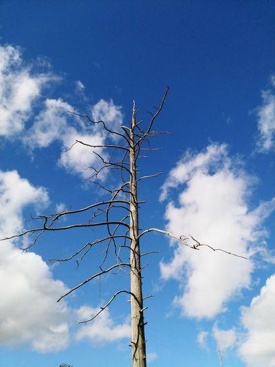 Tree Tree Trunk Dead Tree Technology Blue Sky Cloud - Sky Branch Bare Tree Dead Plant