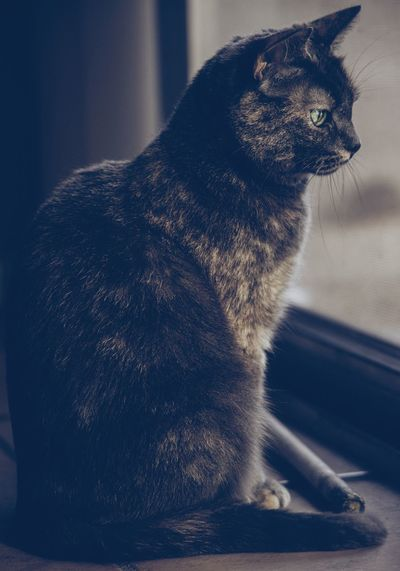 Side view of a cat looking away at home