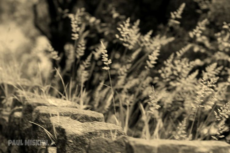 Grass Tall Grasses Tall Grass Blowing In The Wind Nature Taking Photos Check This Out Relaxing Hi! Enjoying Life