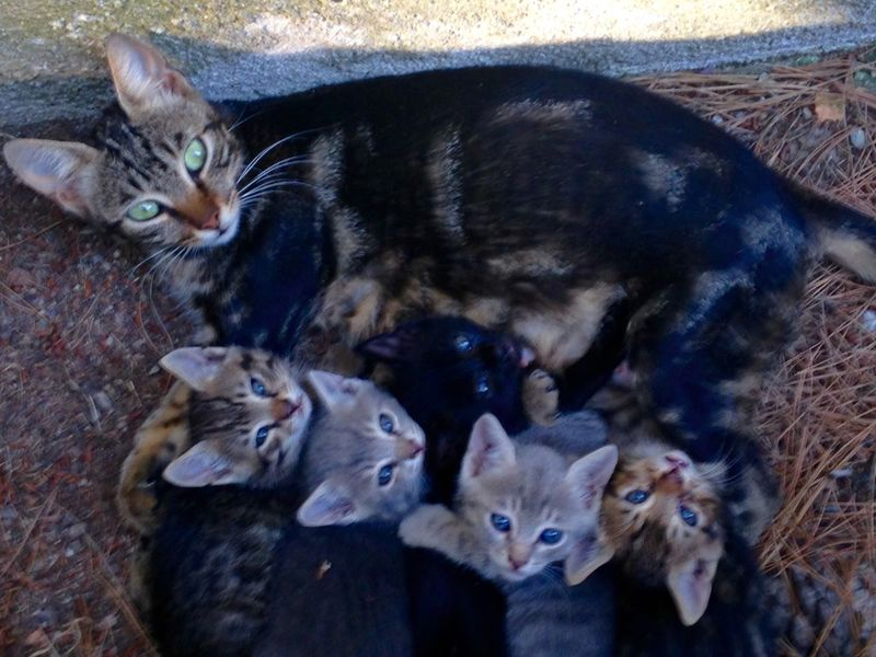 Cat Cats Cat♡ Catsofinstagram Cat Lovers