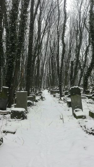 Inside de infinite cemetery Warsaw Warsaw Poland Varsovia War Unknown Tribute Jewish Jewish Cemetery Cemetery Water No People Day Outdoors Nature Close-up Tree
