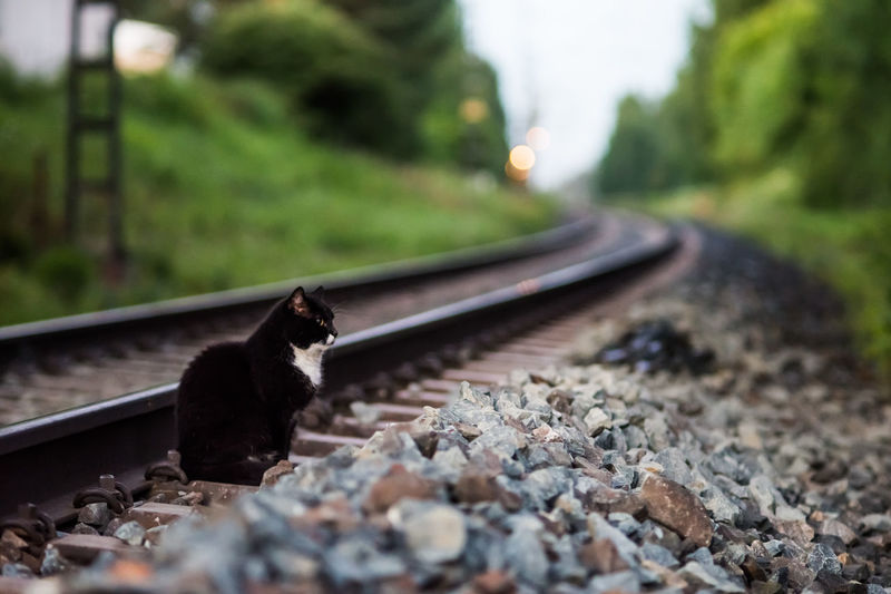 Cat looking for a breakfast Morning Waiting Animal Animal Themes Cat Hunting Mammal Mode Of Transport Nature No People One Animal Outdoors Rail Transportation Railroad Track Rocks Selective Focus Transportation
