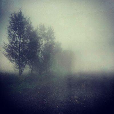 Fog Padova Instapadova Italy