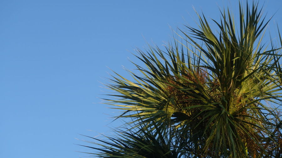 Palm Fronds In