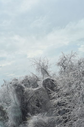 Bare Tree Beauty In Nature Cloud - Sky Cold Cold Day Cold Weather Day Growth Iceytree Nature Outdoors Sky Tranquility Tree