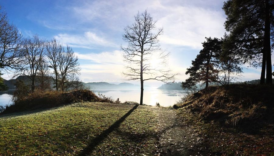 Norway Beautiful Nature Photography Sky Norwegianfjords Sun Paradise Tree Harmony