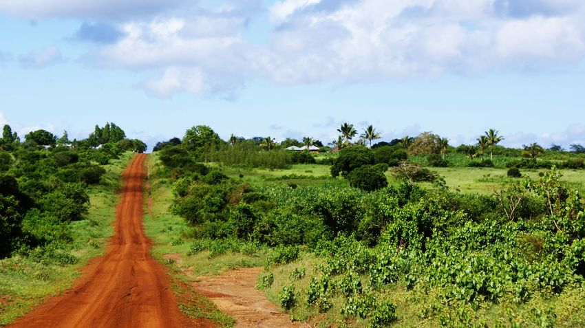 Africa Kenya Tsavo Est Nature Tree Sky Cloud On Moves Road Tourism Environment Plant Tranquility The Way Forward Landscape Cloud - Sky Day Outdoors Land Direction Tranquil Scene Scenics - Nature