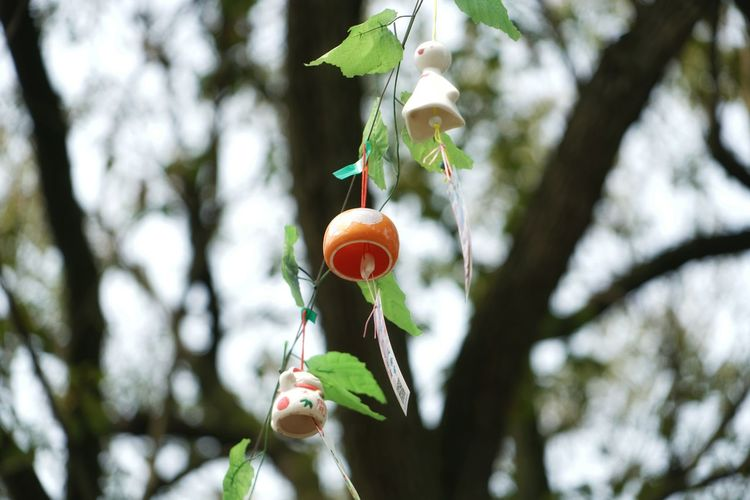Low Angle View Of Decoration Hanging From Cable Against Trees