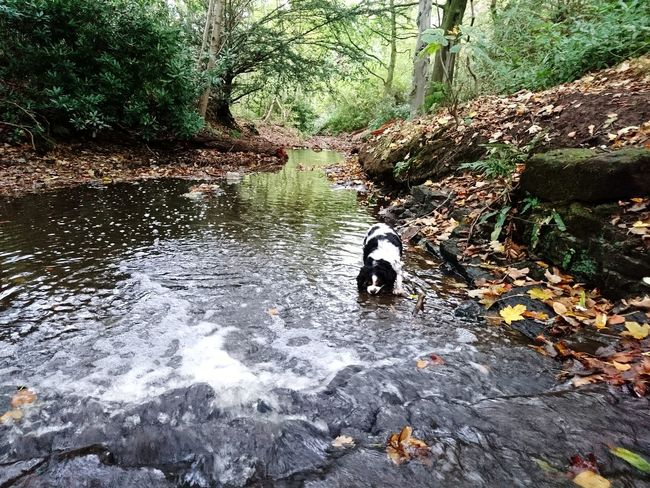Pets Animal Themes Dog One Animal Day Outdoors Domestic Animals Water Mammal Nature No People Tree Motion Autumn Green Color River Waterfall Autumn Leaves Autumn Colors Arrowe Country Park Arrowe Brook Arrowe Park Reflections In The Water Tranquility Forest