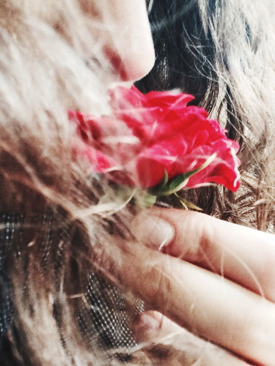 one person, real people, human hand, human body part, holding, human hair, lifestyles, women, close-up, day, outdoors, childhood, flower, people, adult