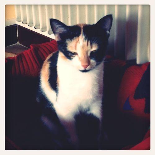 Cat Gaïa
