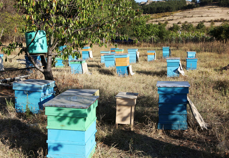Painted wooden beehives with active honey bees
