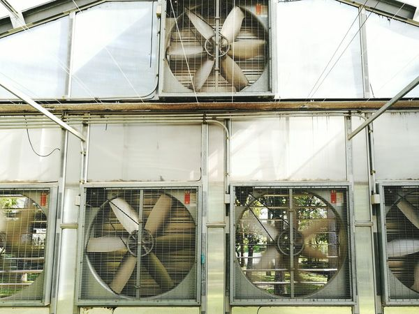 Farm fan in greenhouse for agricultural business Built Structure Architecture Indoors  Greenhouse Hydroponics Business Professional Farm Modern Food Agriculture System Sun Fan Bird Huge Metal Multiple Heavy Control Temperature Humid Engineering EngineeringStudent Flower