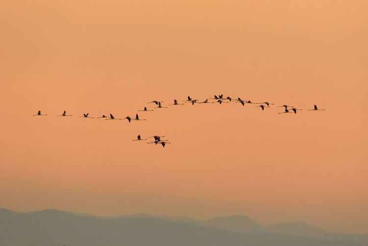 Flock Of Birds Flying Against Sky During Sunset