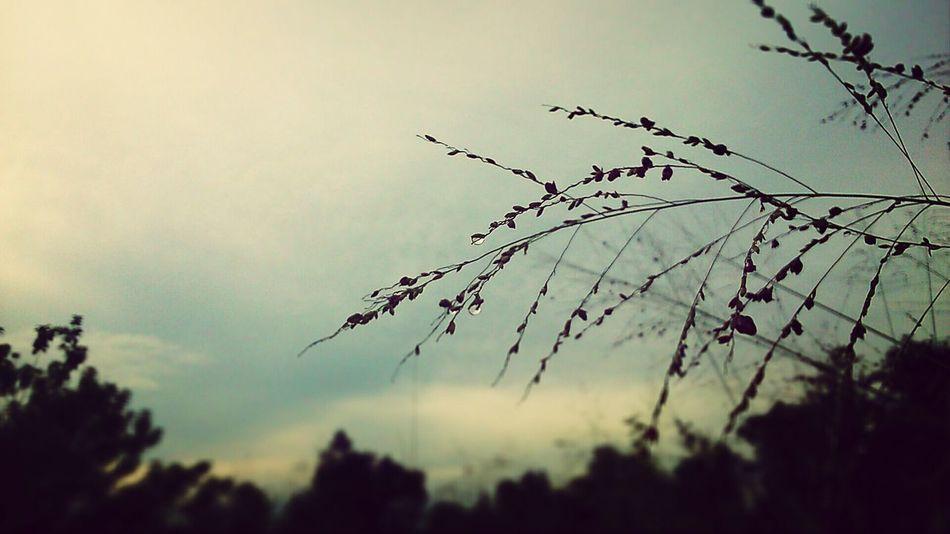 Nature Greyskies Morning Xperiaphotography