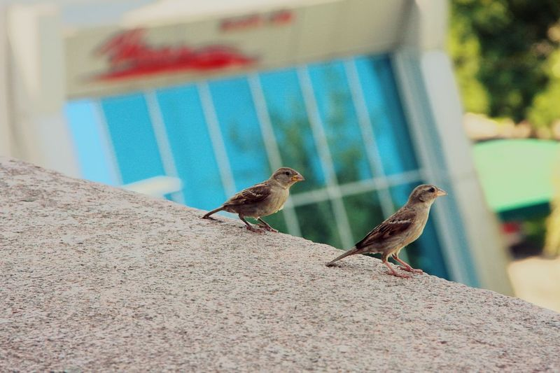 Animals In The Wild Animal Themes Wildlife Bird Zoology Selective Focus Animal Animal Behavior No People TakeoverContrast Beauty In Nature Nature Close-up Masterpiece Adapted To The City