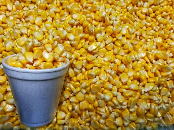 Corn kernels aplenty Yellow Corn Kernels Corn Cup White Cup Food And Drink No People Food Close-up Day Indoors