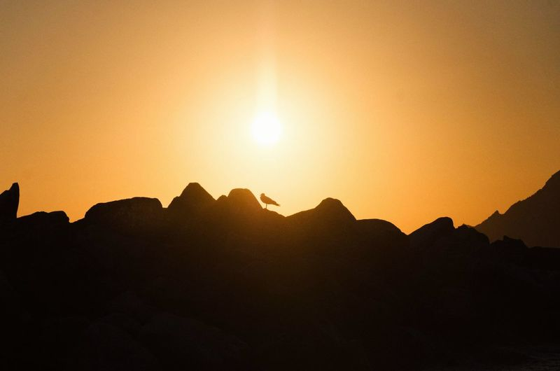 Bird Landscape Astronomy Mountain Sunset Desert Silhouette Space Rock - Object Sky Mountain Range Landscape Shining Sun Sunrise Capture Tomorrow
