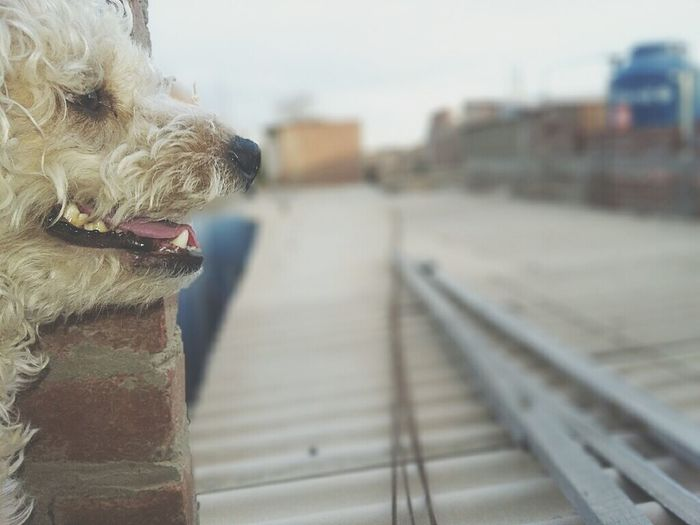 One Animal Focus On Foreground Domestic Animals Pets Animal Themes Dog Close-up Day Sky Outdoors Pet Fotography Shihtzuofinstagram Shih Tzu Friendship Photography Perros❤ Mascotas 🐶 FotoDelDia Mammal