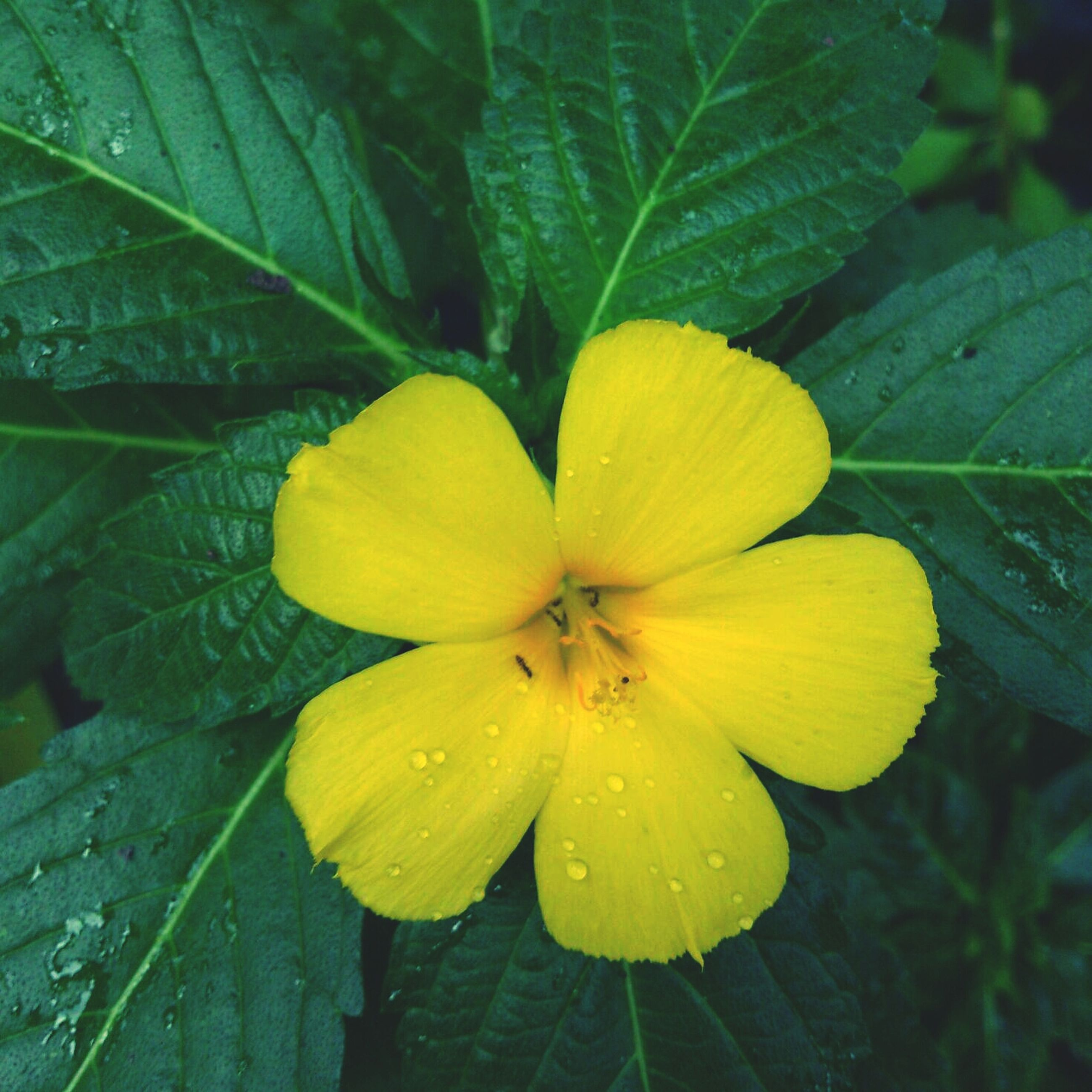 freshness, flower, petal, fragility, drop, water, wet, yellow, flower head, growth, close-up, leaf, beauty in nature, nature, single flower, plant, blooming, focus on foreground, dew, high angle view